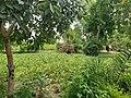 Gurukul Gardens.jpg