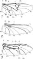 Hártyás szárny.Típusok.png