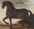 Hästporträtt från cirka 1650 - Skoklosters slott - 95251.tif