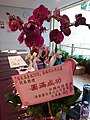 HKCL 銅鑼灣 CWB 香港中央圖書館 Hong Kong Central Library 展覽廳 Exhibition Gallery flowers March 2016 SSG 14.jpg