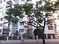 HK 觀塘 Kwun Tong 月華街 Yuet Wah Street morning October 2018 SSG 08.jpg