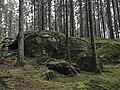 Halen III Nature Reserve Forest.jpg