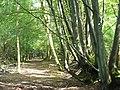 Hambledon Hurst - geograph.org.uk - 242768.jpg