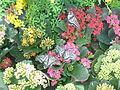 Hampyeong butterfly festival 152.JPG