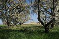 Hangflächen um den Heidesheimer Weg7.jpg