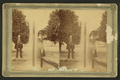 Hart's Daily Line Oklawaha Steamers, from Robert N. Dennis collection of stereoscopic views 3.png