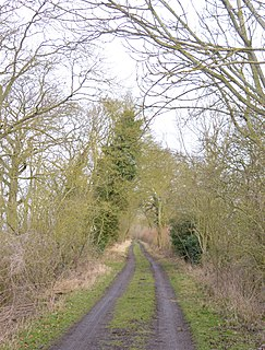 Hayley Wood nature reserve in the United Kingdom