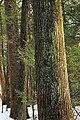 Henry's Woods (Revisit) (3) (12867831274).jpg