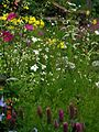 Herbaceous border, Pool Meadow - Flickr - peganum (2).jpg