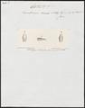 Herpetodryas tricolor - kop - 1700-1880 - Print - Iconographia Zoologica - Special Collections University of Amsterdam - UBA01 IZ12100125.tif