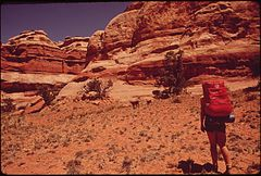 Hiker in the Maze, a Remote and Rugged Region in the Heart of the Canyonlands, Encounters Some Cattle Grazing, 05-1972 (3814165419).jpg