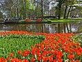 Holandia Keukenhof - panoramio (12).jpg