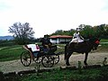 Horse Buggy Rides - panoramio.jpg