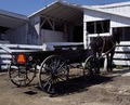 """Horse and flatbed buggy in """"Amish Country,"""" Lancaster County, Pennsylvania LCCN2011635687.tif"""