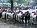 Horses for rent.jpg