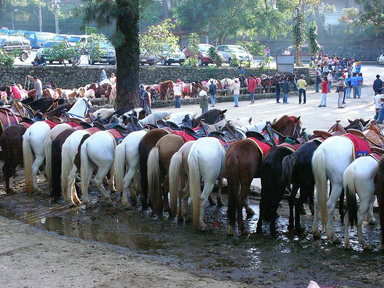 Rent Horses On Long Beach Island