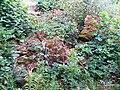Hosle steinbrudd limsteinveien IMG 9716 rk 52969.JPG
