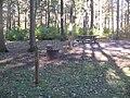 Hyner Run State Park campsite.jpg
