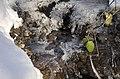 Icy stream - geograph.org.uk - 1656451.jpg