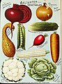 Illustrated hand book - Rawson's vegetable and flower seeds - W.W. Rawson and Co. (1895) (14796418613).jpg
