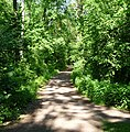 Im Mutterstädter Wald - panoramio.jpg