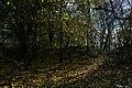 In the forest near Ubezhenskaya.jpg