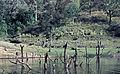 India-1970 039 hg.jpg