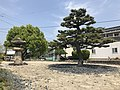 Ippommatsu Pine Tree and stone lantern on Innoshima Island 2.jpg