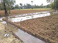 Irrigation in Tamil Nadu.jpg