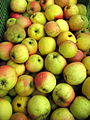 Jablka, Resista.jpg