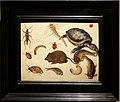 Jan bruegel il giovane, studio di topolino, tartaruga, libellula, scarafaggio, bruco e pesce.JPG