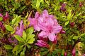 Japanese Gardens Flowers 1.jpg