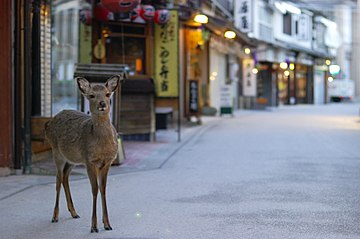 Japanese sika deer at Miyajima; 2009.jpg