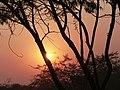 Jodhpur - Sonnenuntergang 2.jpg