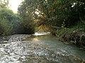 Jungle 2013-09-01.jpg