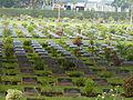 Kanchanaburi War Cemetery P1100773.JPG