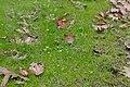 Kattoudhia-Mylikouri Nature Trail - panoramio (20).jpg