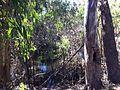 Kew Billabong.jpg