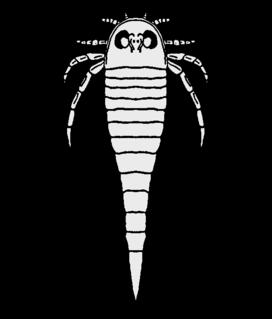 Rhenopteridae
