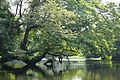 Kings Lake - Indian Botanic Garden - Howrah 2012-09-20 0071.JPG