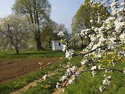 Kirschbluete-Pretzfeld