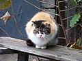 Kočka v Suchdole.jpg