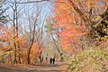 Koyodai 2011-11-20 - panoramio.jpg