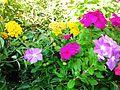 Kreta Oost 2012 015 flowers.jpg