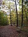 Kunratický les, cesta od hradu do Horních Kunratic.jpg