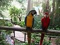 Kuranda Birdworld Cairns.JPG
