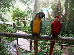 Kuranda, Queensland - Birdworld Kuranda, 2012