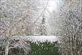 La neige à Antony (5274456718).jpg