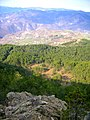 La pineta di Coli e Bobbio sullo sfondo - panoramio.jpg