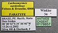 Lachnomyrmex nordestinus casent0178857 label 1.jpg